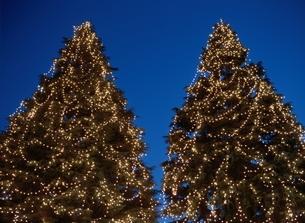 イルミネーションのついた2本のクリスマスツリーの写真素材 [FYI03167979]