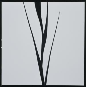菖浦の茎の写真素材 [FYI03168037]