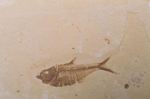 FISH FOSSILの写真素材 [FYI03168104]