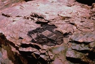 フロッピーディスクの化石の写真素材 [FYI03168200]