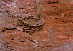 CD-ROMの化石の写真素材 [FYI03168211]