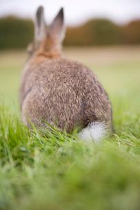 芝生の上のネザーランドドワーフの写真素材 [FYI03168418]