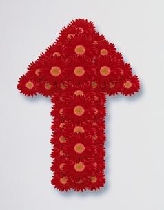 複数の花の矢印(赤)の写真素材 [FYI03168443]