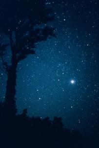 木と金星(群青)の写真素材 [FYI03168501]