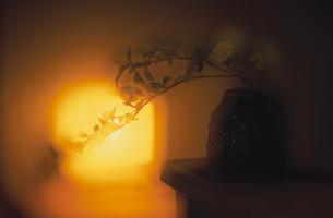 照明器具と花のシルエットの写真素材 [FYI03168555]