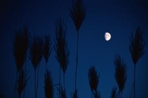 月の写真素材 [FYI03168631]