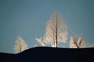 シラカバの白霜 幌加内 北海道の写真素材 [FYI03168632]