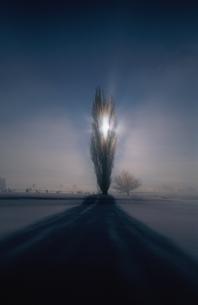 冬のポプラと川霧   北海道の写真素材 [FYI03168680]