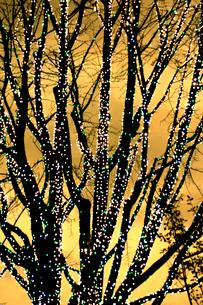 クリスマスイルミネーションの木の写真素材 [FYI03168804]