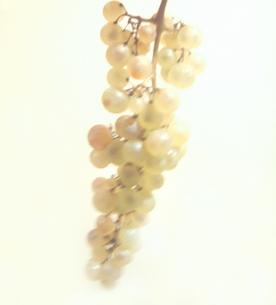 葡萄の房の写真素材 [FYI03168931]