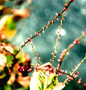 植物の写真素材 [FYI03168987]