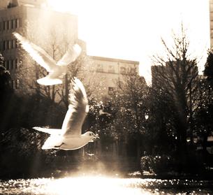 水辺を飛び立つ鳥の写真素材 [FYI03169004]