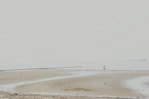 潮が引いた浜辺の写真素材 [FYI03169011]