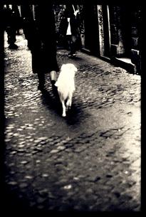 パリジェンヌと犬の写真素材 [FYI03169058]