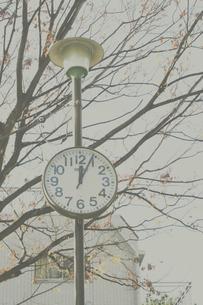 公園の時計の写真素材 [FYI03169165]