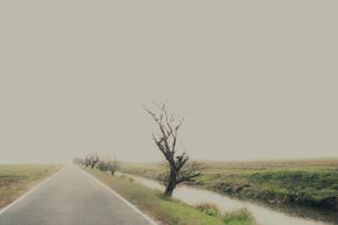 畑とまっすぐな道の写真素材 [FYI03169194]