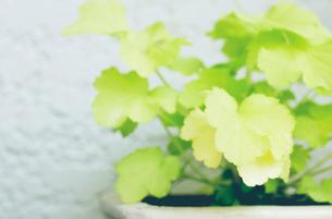 プランターの植物の写真素材 [FYI03169231]