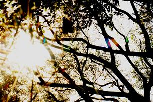 木のシルエットの写真素材 [FYI03169323]