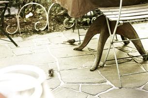 庭のテーブルと椅子とスズメの写真素材 [FYI03169439]