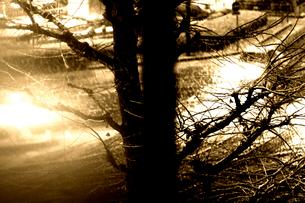 雪降る夜の街の写真素材 [FYI03169445]