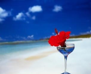 海辺のグラスとハイビスカスの写真素材 [FYI03170019]