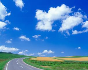 畑に続く道の写真素材 [FYI03170029]