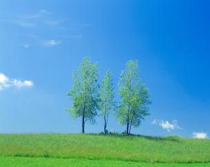 青空と木の写真素材 [FYI03170043]
