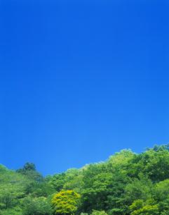 新緑と青空の写真素材 [FYI03170059]