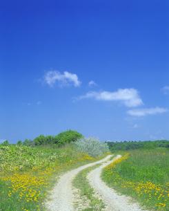 花の咲く道の写真素材 [FYI03170074]