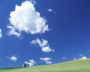 そば畑と青空の写真素材 [FYI03170093]