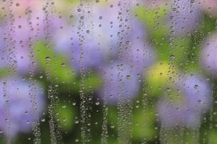 水滴のついた窓ガラスとアジサイの花の写真素材 [FYI03170196]