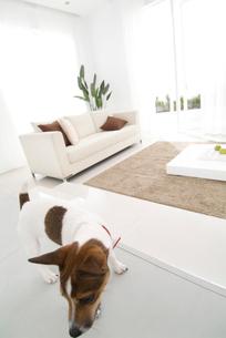 リビングルームと犬の写真素材 [FYI03170499]
