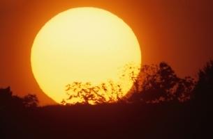 オレンジ色の太陽と木のシルエットの写真素材 [FYI03170530]