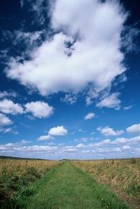 ベニヤ原生花園の道と空 9月  北海道の写真素材 [FYI03170536]