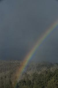 森と虹の写真素材 [FYI03170576]