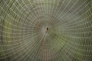 クモの巣の写真素材 [FYI03170586]