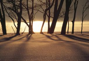 朝日の雪景色の写真素材 [FYI03170607]