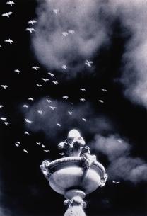 石柱と飛んでいる鳥 B/W サンフランシスコの写真素材 [FYI03170808]