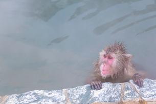温泉を楽しむ猿 函館市熱帯植物園の写真素材 [FYI03171015]