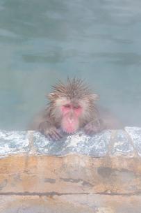 温泉を楽しむ猿 函館市熱帯植物園の写真素材 [FYI03171018]