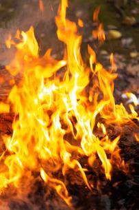 燃え上がる焚き火の炎の写真素材 [FYI03171046]