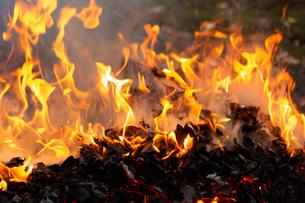 燃え上がる焚き火の炎の写真素材 [FYI03171048]