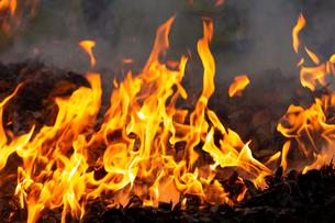 燃え上がる焚き火の炎の写真素材 [FYI03171054]