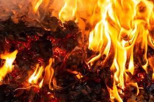 燃え上がる焚き火の炎の写真素材 [FYI03171055]