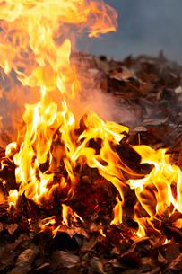 燃え上がる焚き火の炎の写真素材 [FYI03171065]