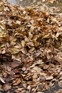 落ち葉枯葉の山の写真素材 [FYI03171070]
