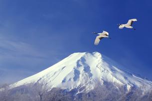 富士山と丹頂鶴の写真素材 [FYI03171661]