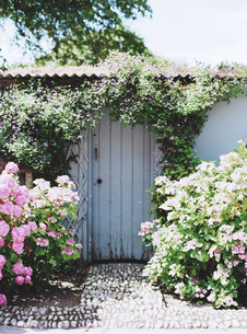 紫陽花に囲まれたドアの写真素材 [FYI03171910]