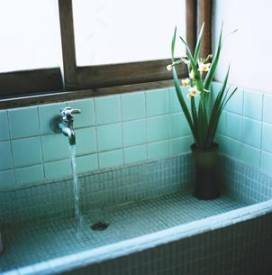 タイルの手洗い場と花瓶のスイセンの写真素材 [FYI03171935]