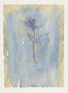 エリンジウムの花 イラストのイラスト素材 [FYI03171994]